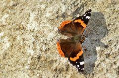 *Winteranfang 2014* --- ha-ha --- mit Schmetterling !!!