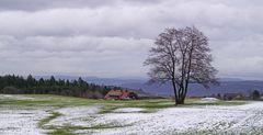 Winteranfang im Hotzenwald