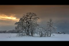 - Winterankunft V -