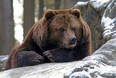 Winterbär