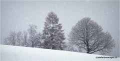 """""""winterbäume"""""""