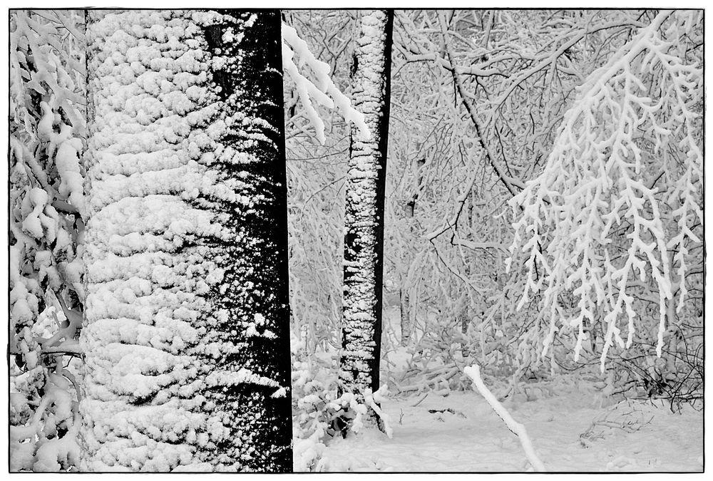 Winterbäume I