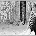 Winterbäume II