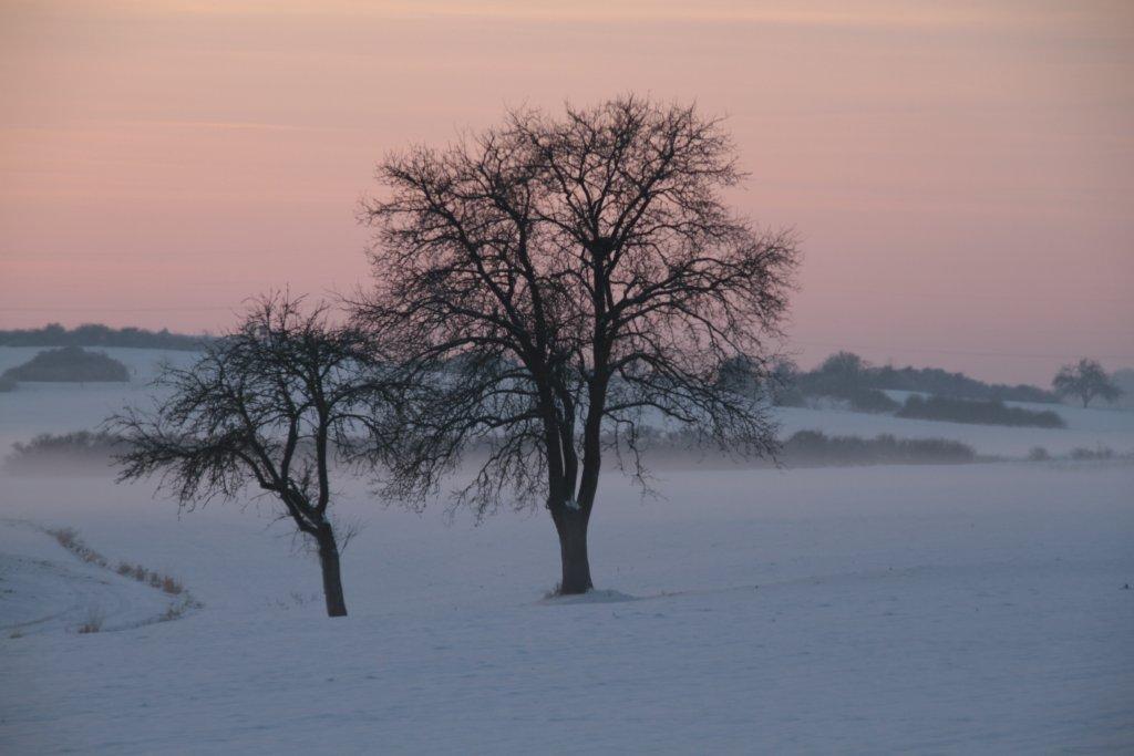 Winterbäume in der Abendsonne