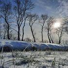 Winterbäume mit Hoffnungslicht