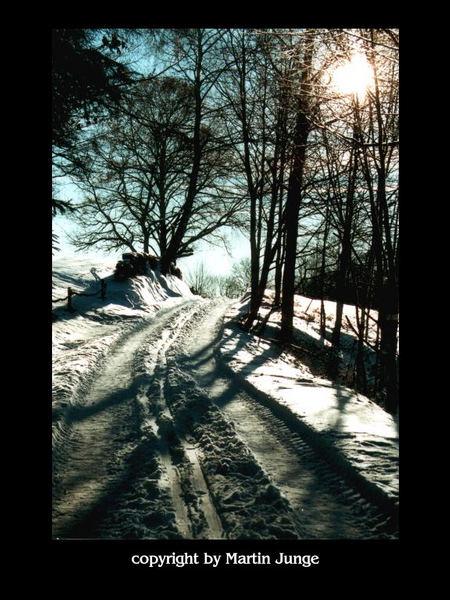 Winterbäume Nr.2
