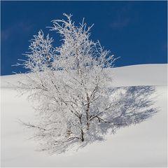winterbäumig