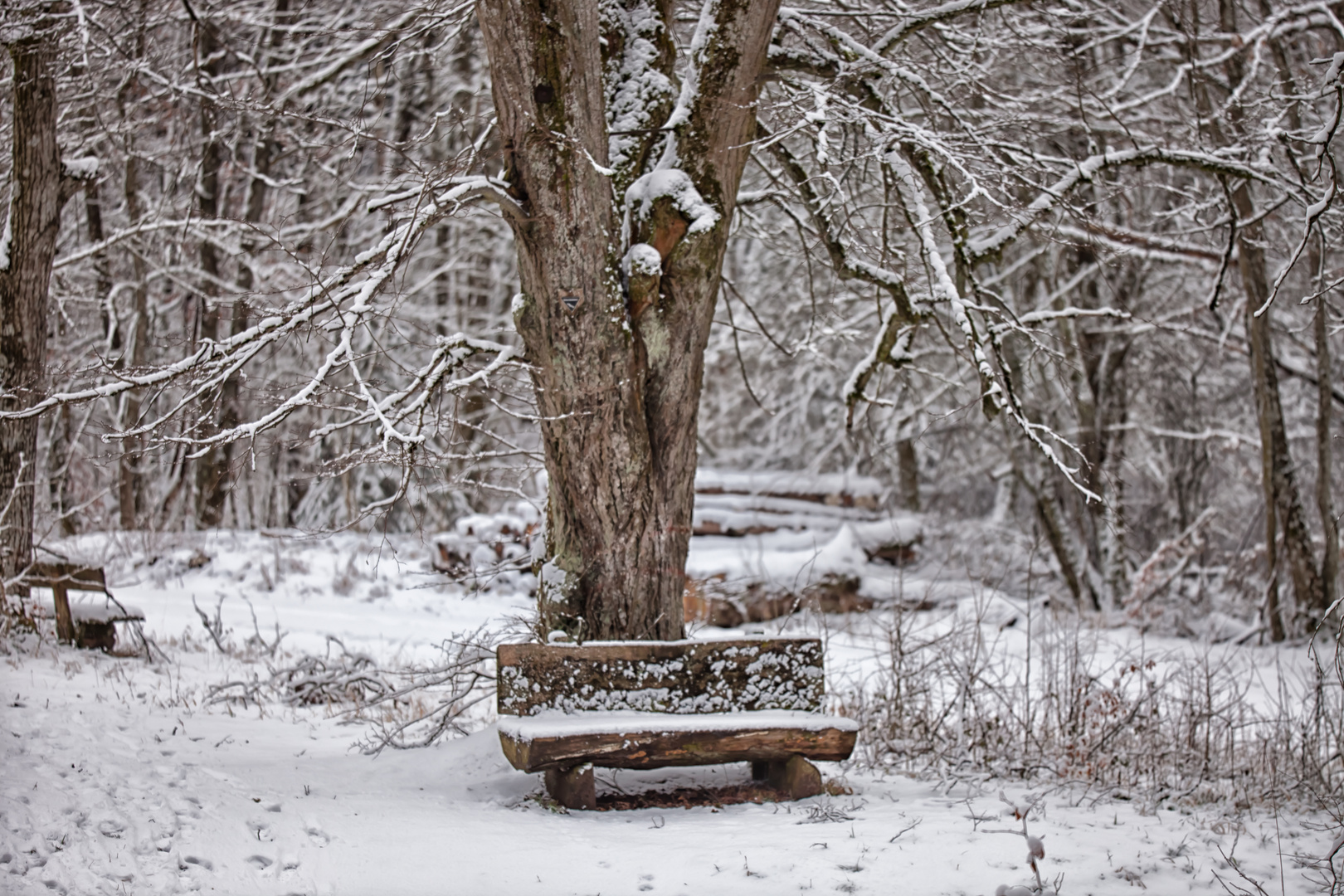 Winterbank