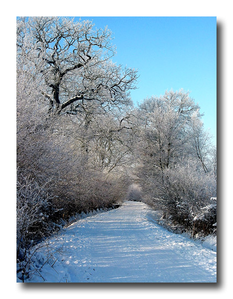 Winterbaum 2