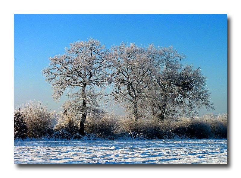 Winterbaum 3