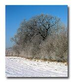 Winterbaum 5