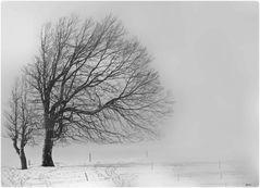 - winterbaum -