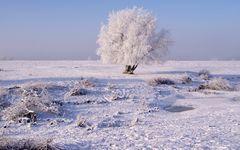 Winterbaum am Niederrhein
