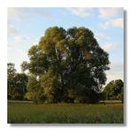 Winterbaum im Sommerkleid