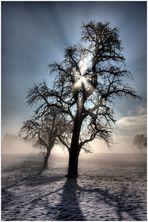 Winterbaum im Sonnenlicht