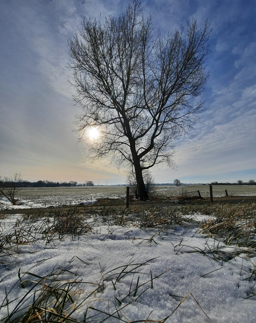 Winterbaum mit Sonnenbesuch