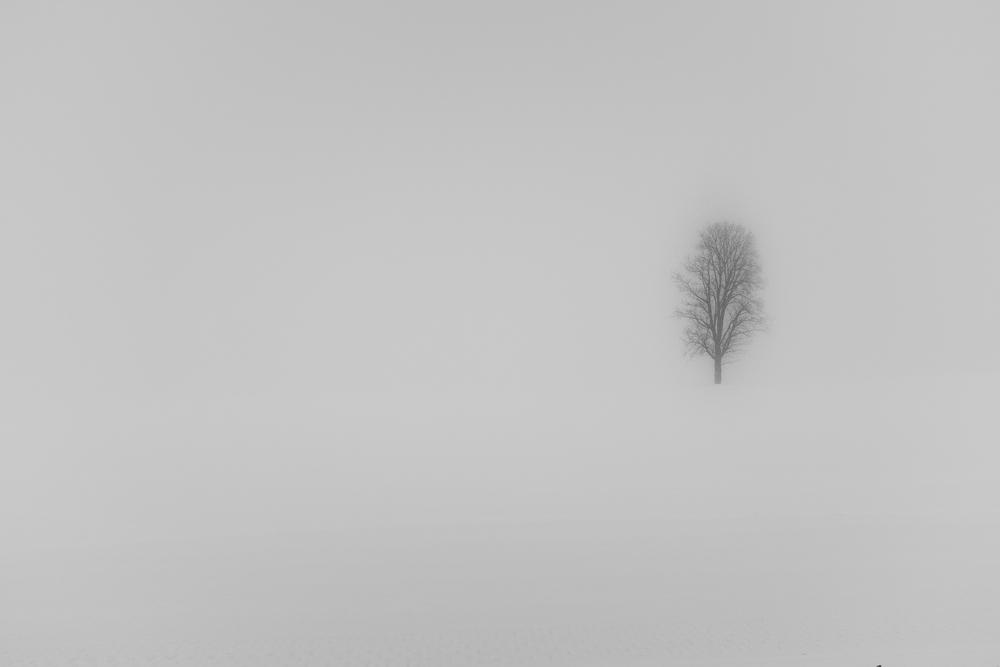 Winterbaum2