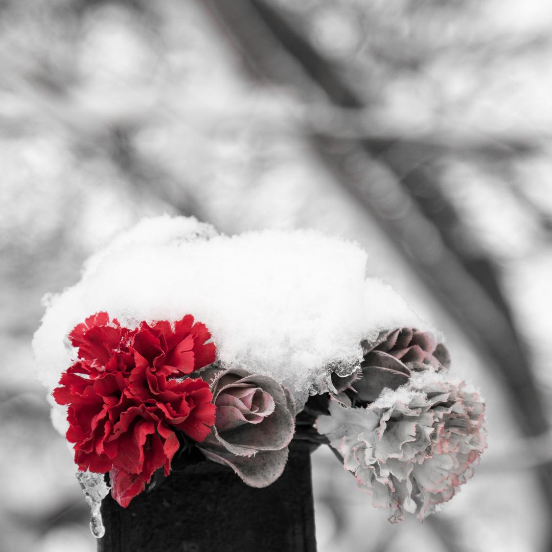Winterbild 3