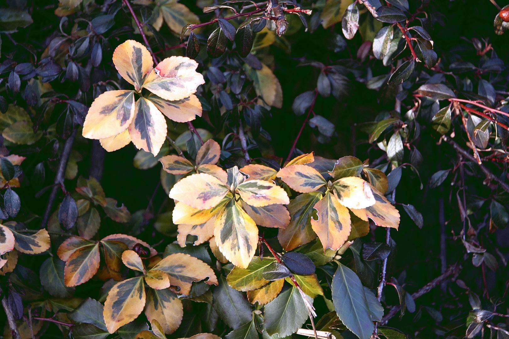 Winterblätter>>>Blätterwinter