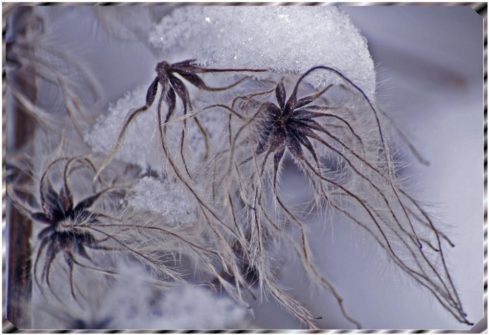 Winterbluete