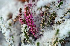 Winterblüte