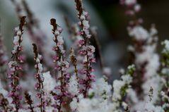 Winterblüten 2