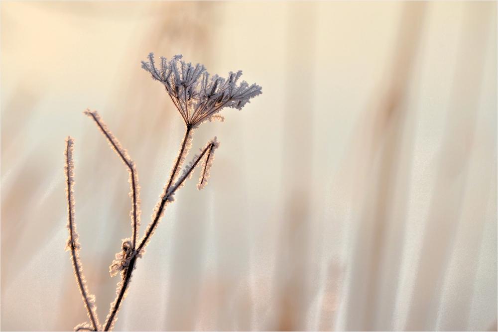 Winterblüten...