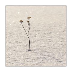 Winterblume....