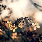 ... Winterblumen ...