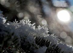 Winterblumen zum 3. Advent! - Les fleurs de l'hiver...