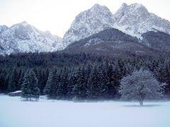 ### Winterdreams ###