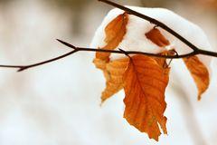 Wintereinbruch.