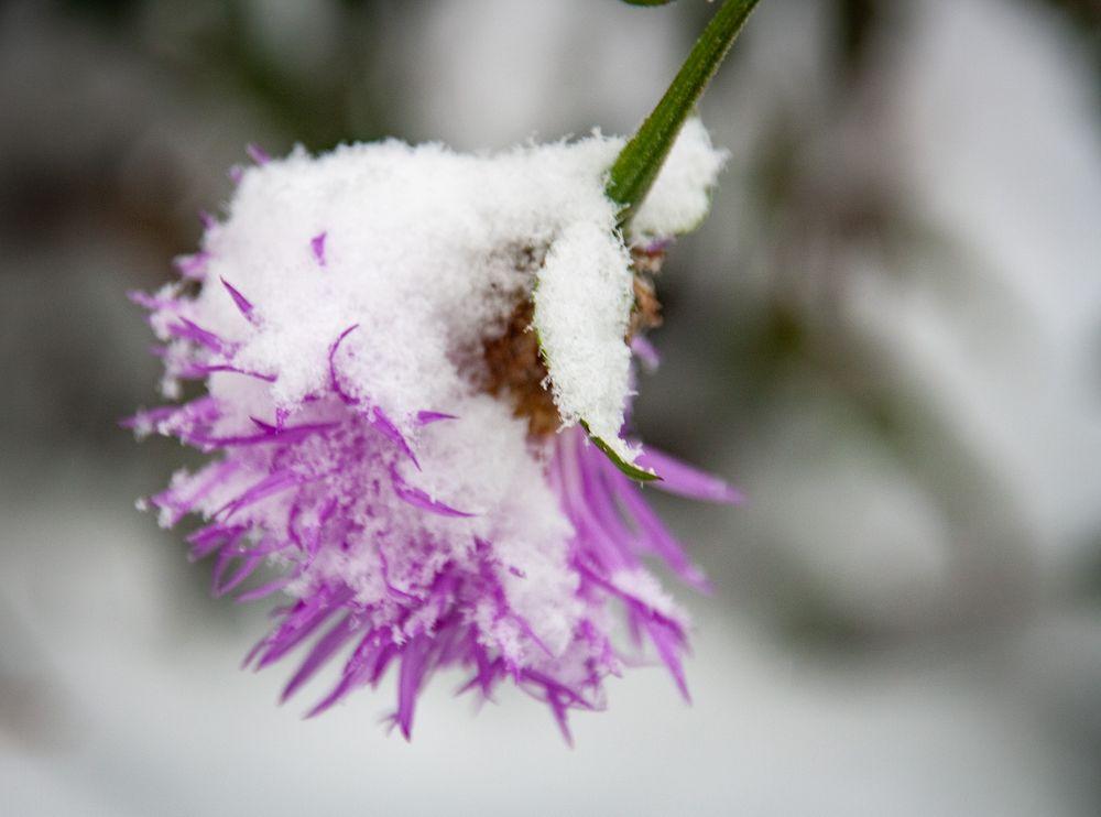 Wintereinbruch - erster Schneefall