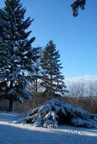 Wintereinbruch Nov 08