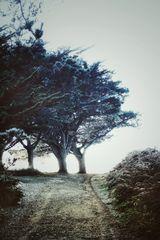 Winterfeeling.       Der Weg (16)