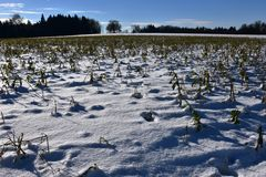 Winterfeld