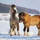 ... Winter.Freuden ...