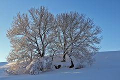 Winterfreuden 3