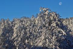 Winterfreuden 4