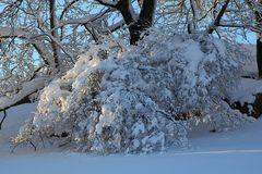 Winterfreuden 5