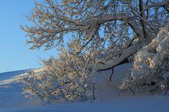 Winterfreuden 6