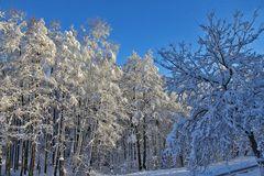 Winterfreuden 7