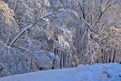 Winterfreuden 9