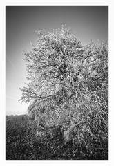 - Winterfrost IV -