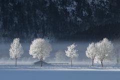 ~ Winterfrühling ~