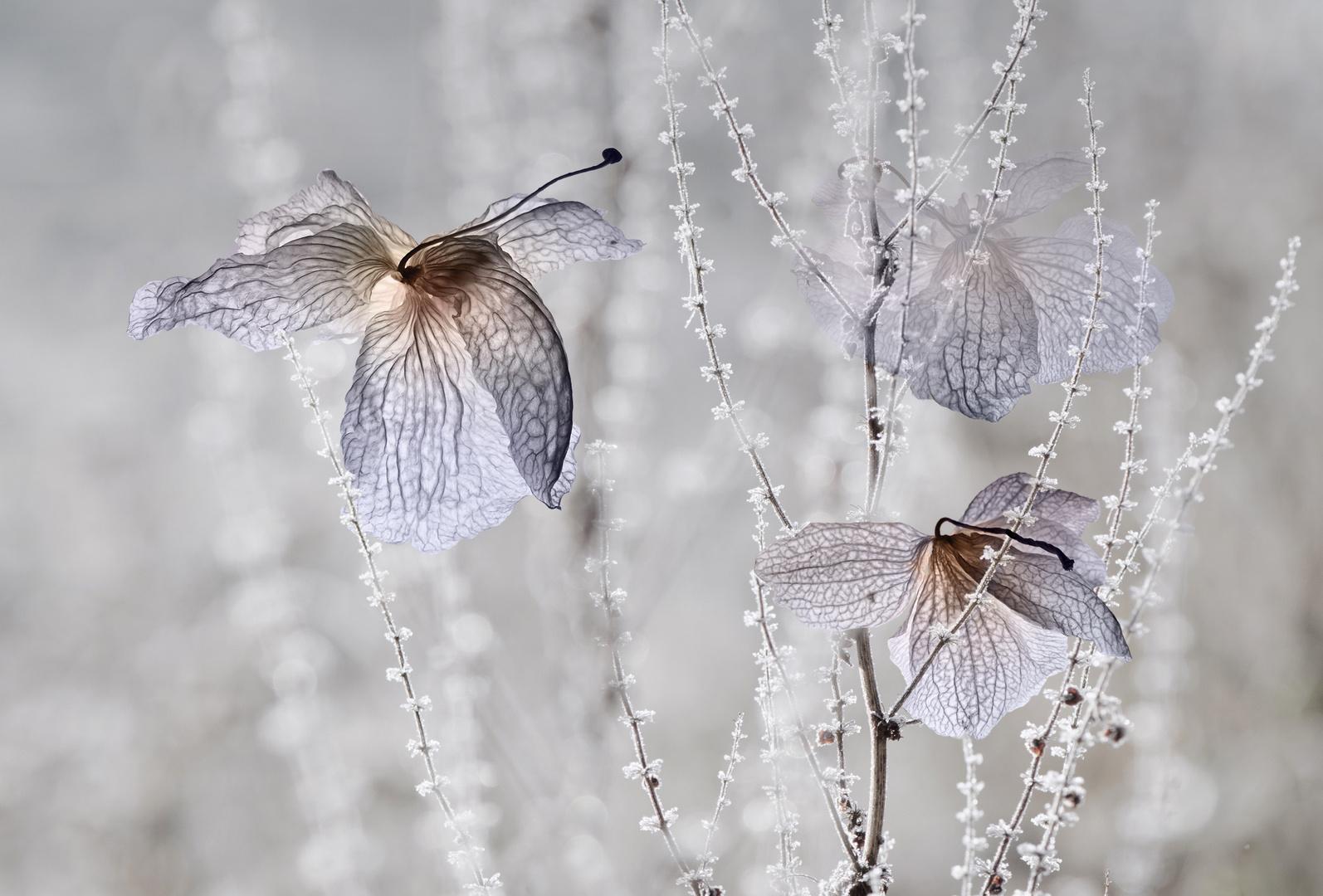 Winter.Garten