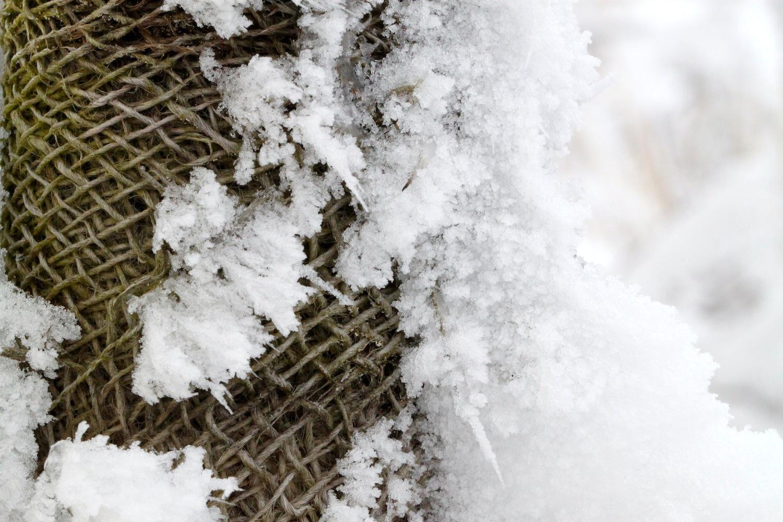 Wintergeflecht
