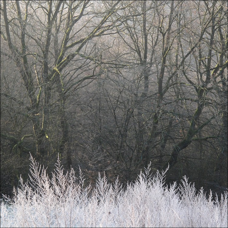 wintergraphik
