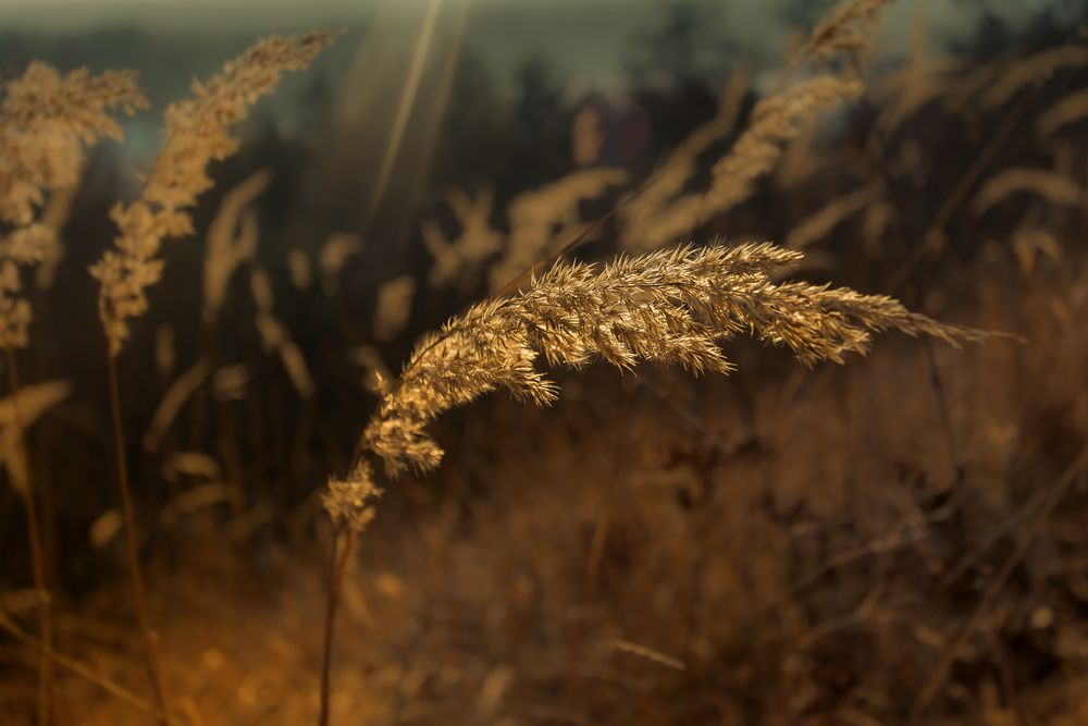 Winter:Gras