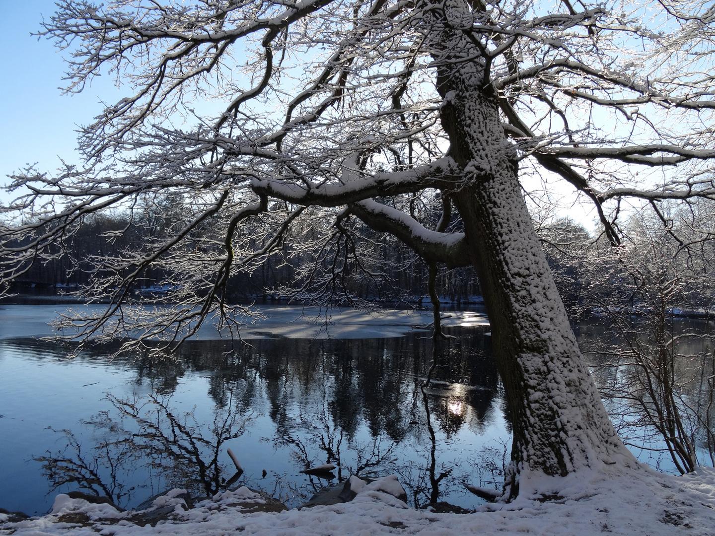 Wintergruß aus Frankfurt